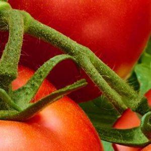 Proven Harvest