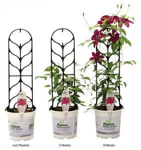 Go & Grow™ Clematis Kit