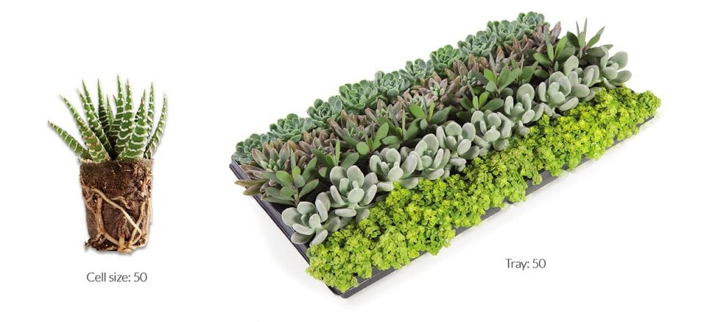 Go & Grow™ Succulent® Kit
