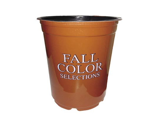 4.25 Fall Color Selections Sold 10 per Tray