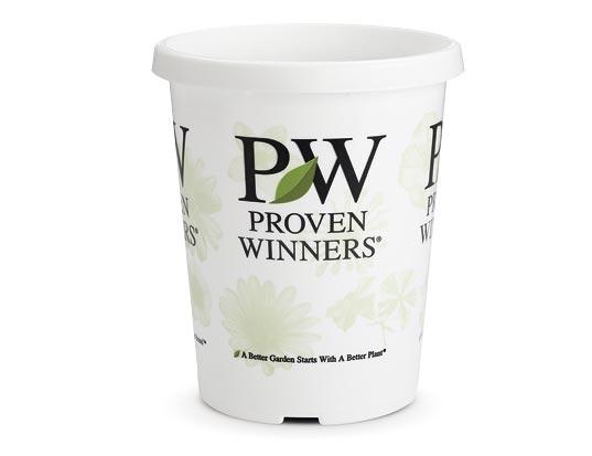 4.25 Proven Winners® Grande™ Sold 10 per Tray