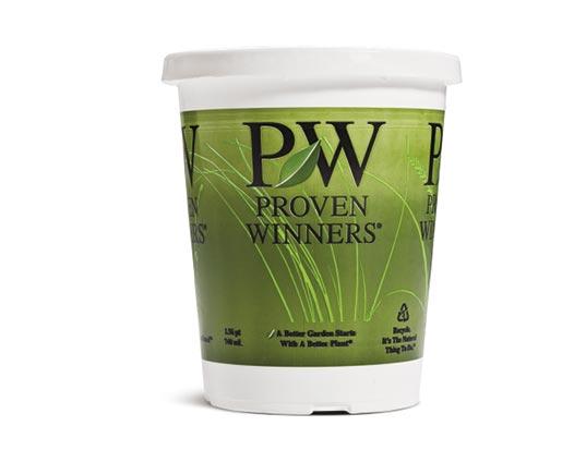 4.25 Proven Winners® Grass Grande™ Sold 10 per Tray