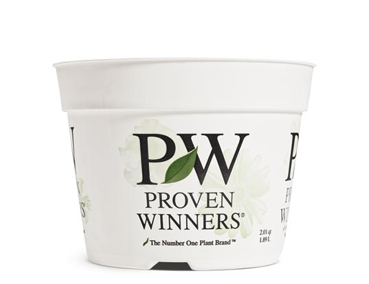 6.5 Proven Winners® / Proven Selections® Sold 6 per Tray
