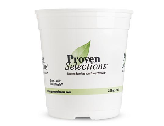 1 Gallon Royale™ Proven Selections® Sold 3 per Tray