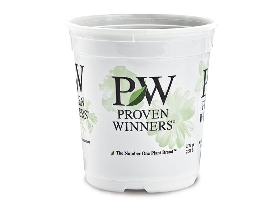 1 Gallon Royale™ Proven Winners® Sold 3 per Tray