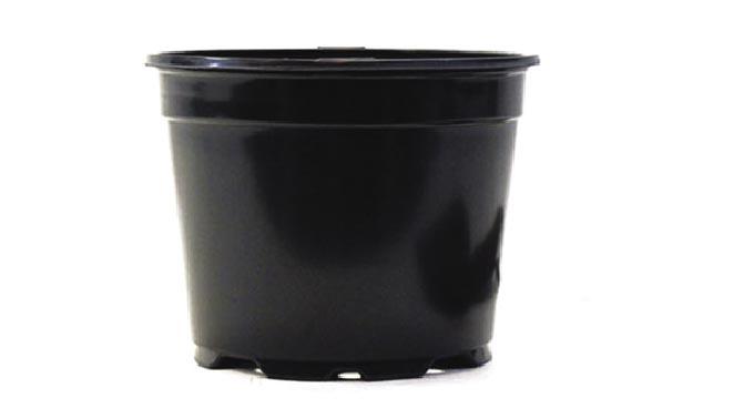 8.25 Fall Aster/Kale/Mum Pot Sold Individual