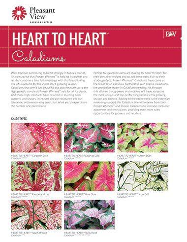 Heart to Heart™ Caldiums Sales Sheet