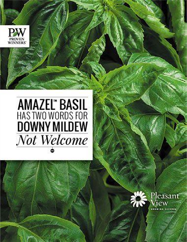 Proven Harvest Amazel Basil Brochure