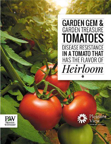 Proven Harvest Tomato Brochure