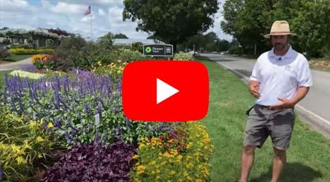 Pollinator Road Part 2