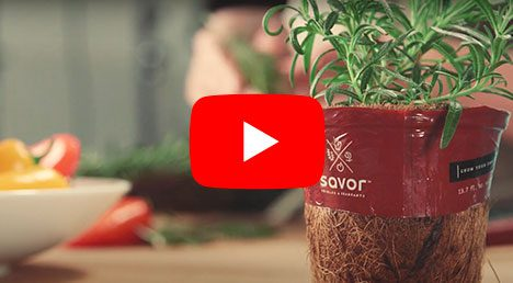 Savor Brand License Program